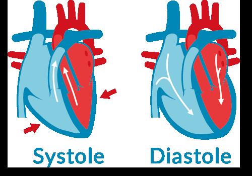 systole-diastole-blutdruck-was-ist-das