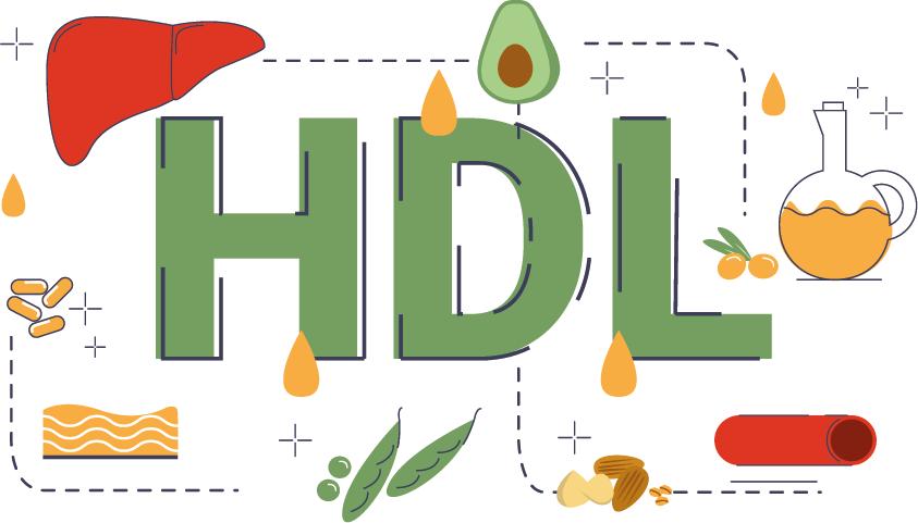 hdl-cholesterin